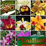 5 Live Orchid Plants +HP(Cattleya, Oncidium, Dendrobium, Vanda, and Phalaenopsis) + Heat Pack