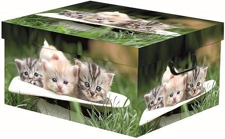 FAG - Caja baúl de cartón para Ropa, 50 x 39 x 25 cm: Amazon.es: Hogar