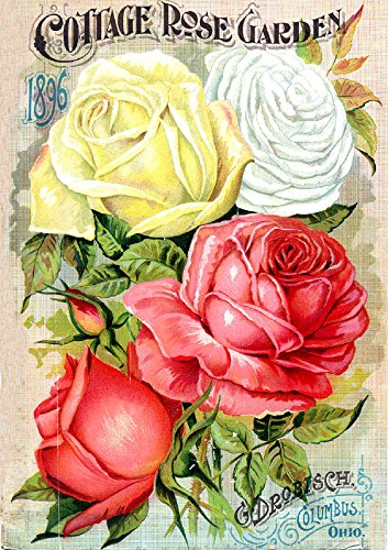 Cottage Rose Garden 1896 Catalog Cover Reproduction 8.5