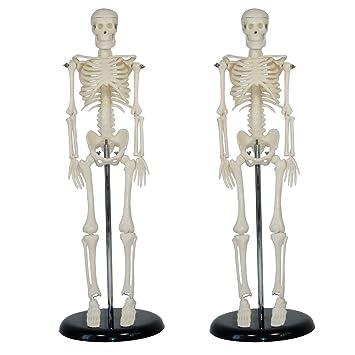 Risingmed Human skeleton anatomical model Life Size 45cm medical ...
