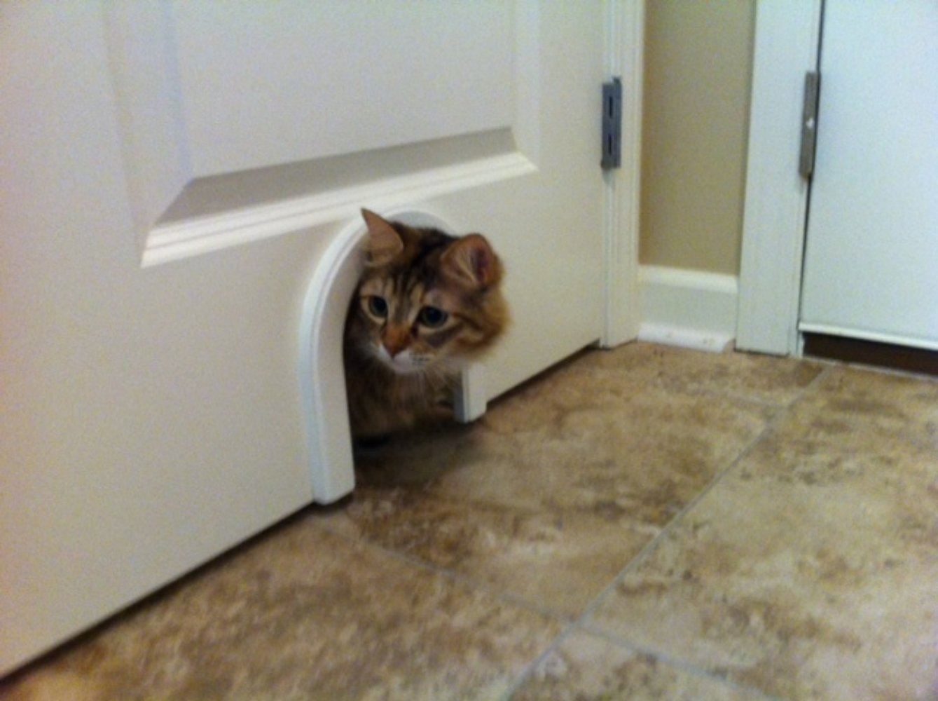 Cat Door - The Original Cathole Interior Pet Door - The Only Cat Door With A Cleaning / Grooming Brush. by CATHOLE (Image #3)
