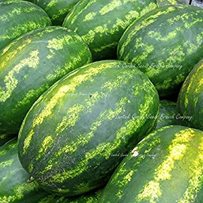 2020 Hot Sale Very Sweet Big Oval Seedless Watermelon Organic Seeds, Professional Pack, 20 Seeds/Pack, Edible Non-GMO Juicy 14% Sugar Melon : Garden & Outdoor