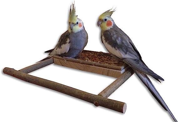 Asiento de madera natural – barra de salida y cenefa para periquitos, ninfa y similares.: Amazon.es: Productos para mascotas