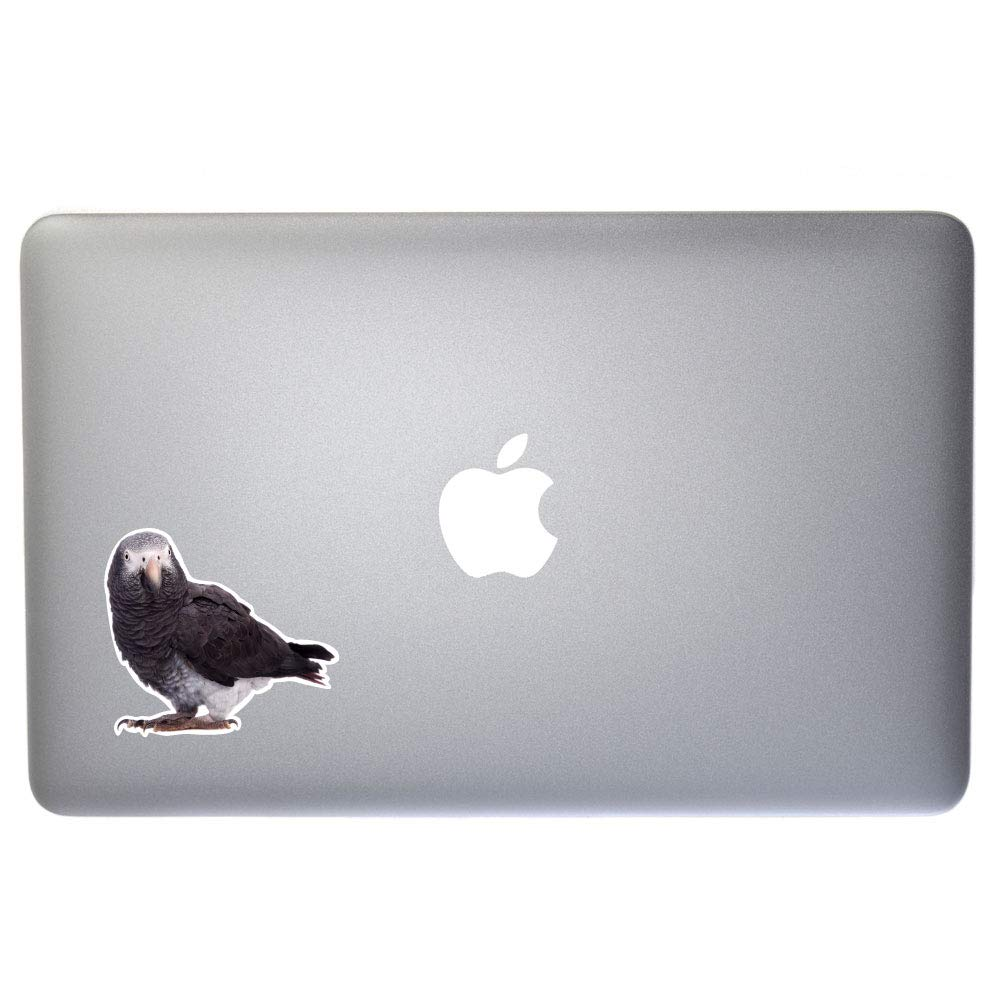 8 Inch Full Color Vinyl Decal for Indoor or Outdoor use Windows and More Laptops Cars D/écor Dark Spark Decals African Grey Parrot Peering