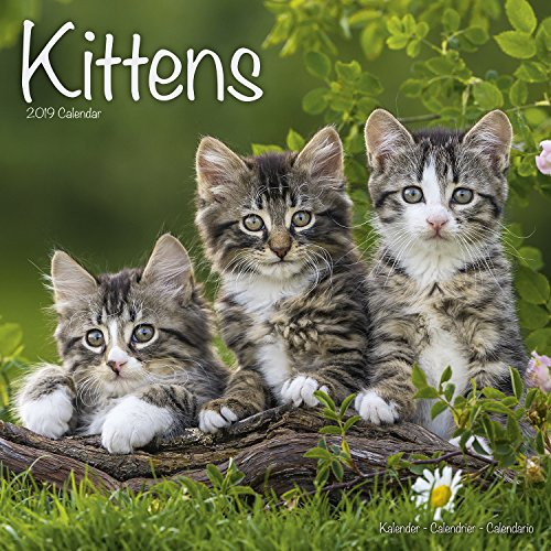 Cute Kitten Calendar - Calendars 2018 - 2019 Wall Calendars - Animal Calendar - Kittens 16 Month Wall Calendar by Avonside Studio