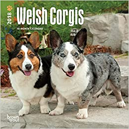 welsh corgis 2019 7 x 7 inch monthly mini wall calendar animals dog breeds multilingual edition