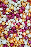 Onion Sets Red,Yellow,White or Mix (40-60 bulbs) Pick color, Garden Vegetable(Red)