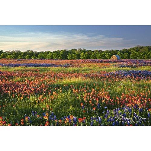 Wildflower Field Photo,