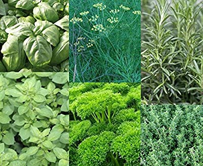 Herbs Jpk Seed Company An Assorted 6 Pack Of Culinary Herb Seeds Includes Genovese Basil Bouquet Dill Oregano Moss Curled Parsley Rosemary And Thyme Approx 100 Seeds Per Packet Of Herbs