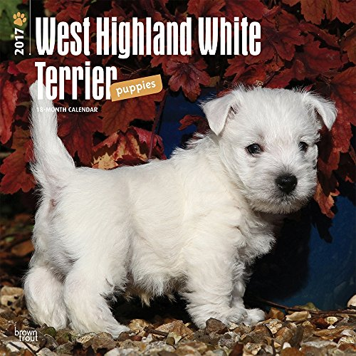 West Highland White Terrier Puppies 2017 Wall Calendar