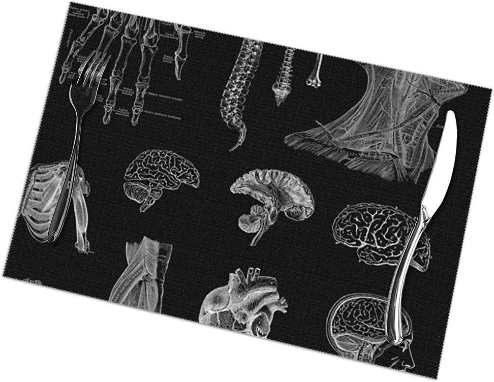 Manteles individuales para mesa Juego de 6 tapetes rectangulares vintage con estampado de anatomía Resistente al calor 45 X 30 Cm