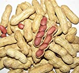 50 Four Grains Red Peanut Plant Organic Vegetable Seeds ~Chris's garden