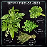 Nature's Blossom Herb Garden Seed Starter Kit. Grow 4 kitchen Herbs from Seeds
