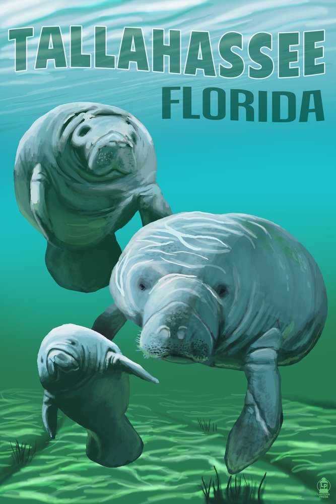 Tallahassee、フロリダ州 – Manatees 24 x 36 Giclee Print LANT-54084-24x36 B00Z4UAK8I  24 x 36 Giclee Print