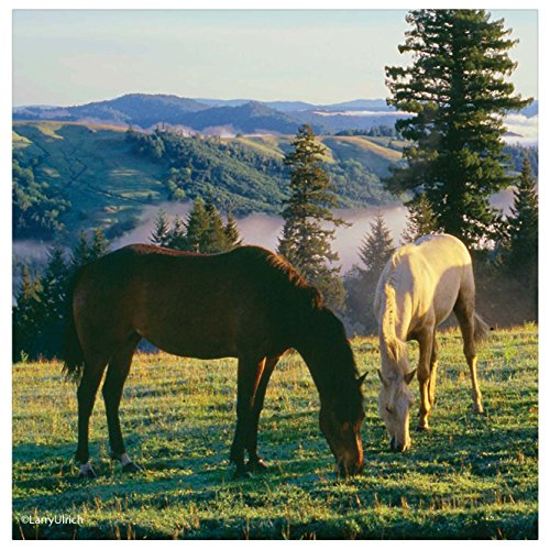 Thirstystone Occasions Coaster, Prairie Horses, Multicolor