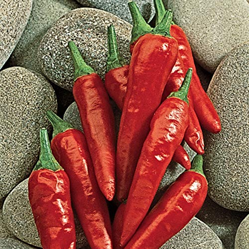 Chili Anaheim - Burpee Anaheim Chili Hot Pepper Seeds 125 seeds