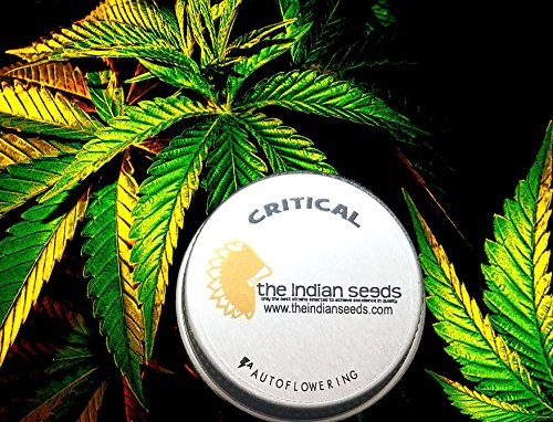 Critical Auto Seeds Pack 3 Indian