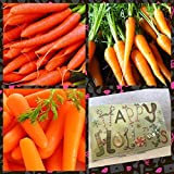 buy Homegrown Carrot Seeds, 525 Seeds, Organic 3 Bundle, Stocking Sized now, new 2018-2017 bestseller, review and Photo, best price $4.97