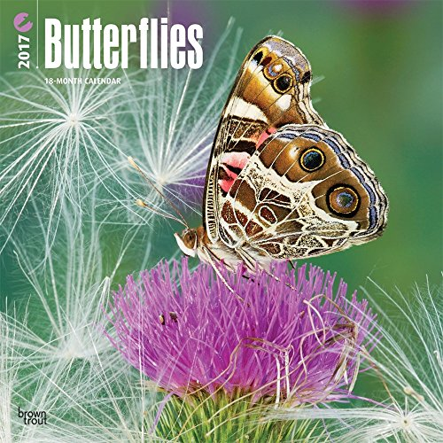 2017 Monthly Wall Calendar - Butterflies
