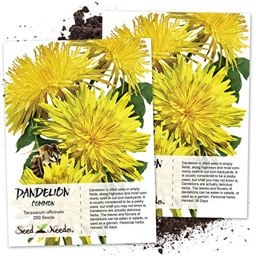 (Seed Needs, Dandelion Herb (Taraxacum officinale) Twin Pack of 250 Seeds Each NON-GMO & Untreated                              )