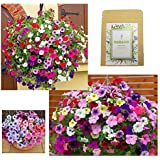 "Petunias Seeds""Crazy Mixture"" (Rainbow Colors) for Indoor & Garden Planting, 500 Non-GMO Perennial Potted Petunia…"