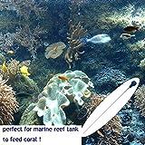 TESLUCK Coral SPS HPS Feeder, Long Arcylic Marine