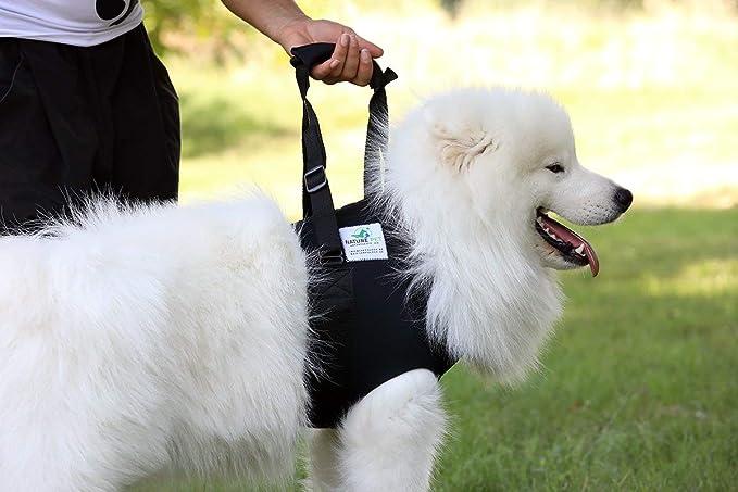 Hunde Tragehilfe Vorne Gehhilfe Hund Vorne Rehahilfe Für ältere Oder Kranke Hunde M Haustier