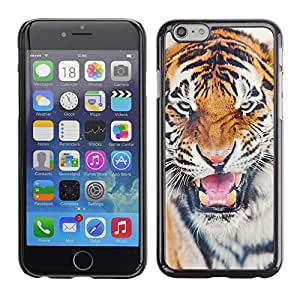 Ziland / Slim Design Case Cover Shel / Angry Cat Big Animal Africa / Apple iPhone 6