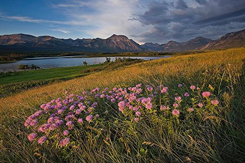 Waterton Park Meadow and Mountain Wallpaper Wall Mural - Self-Adhesive - Multiple Sizes - National Geographic Image from Magic - Park 12 Meadows