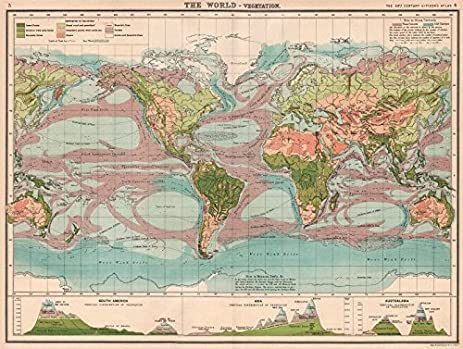 Amazon world vegetation ocean currents vertical world vegetation ocean currents vertical distribution of vegetation 1901 old map gumiabroncs Choice Image