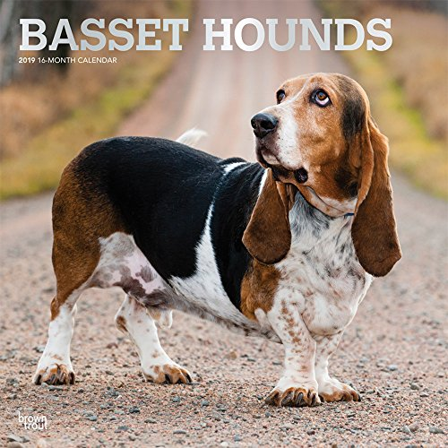Basset Hounds 2019 12 x 12 Inch Monthly Square Wall Calendar with Foil Stamped Cover, Animals Dog Breeds Hound (English, French and Spanish Edition)