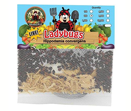 300 Live Ladybugs - Good Bugs - Ladybugs - Guaranteed Live Delivery!