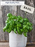 """12"""" Green Wood Plant Stake, Floral Picks, Wooden"""