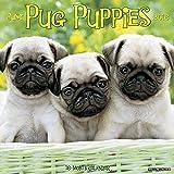 2016 Just Pug Puppies Wall Calendar