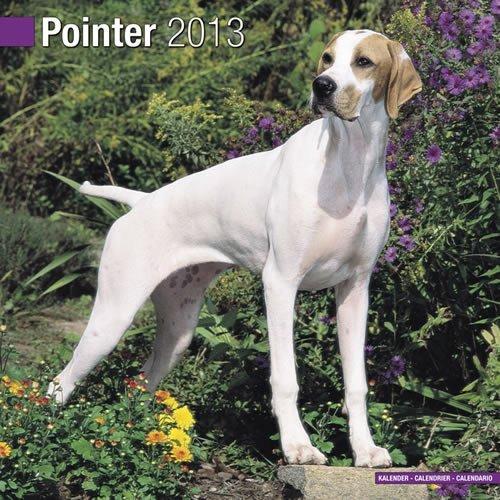 Pointer 2013 Calendar - Pointer 2013 Wall Calendar #10116-13 by Pet Prints (2012-07-23)
