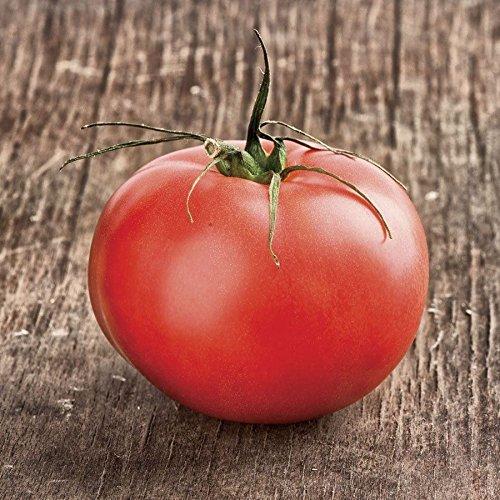 Beefmaster Hybrid Tomato Seeds Indeterminate Vine is Amazingly Heavy-Bearing 50 -