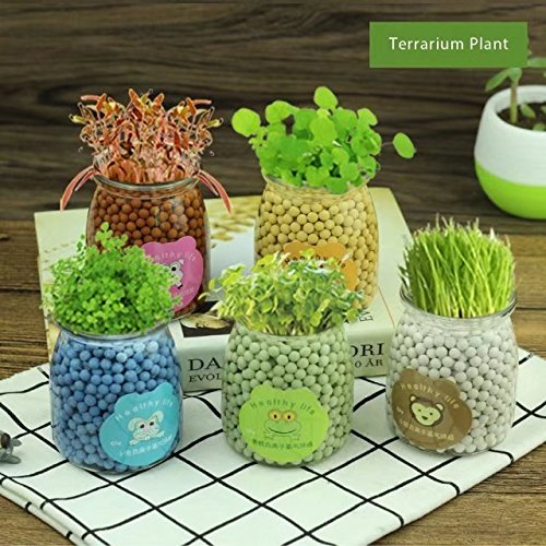 Fly Trap Terrarium (CSKB Pudding Bottle Terrarium, Clear Glass Ball Vase Air Plant Desk Flowerpot Container miss u grass)