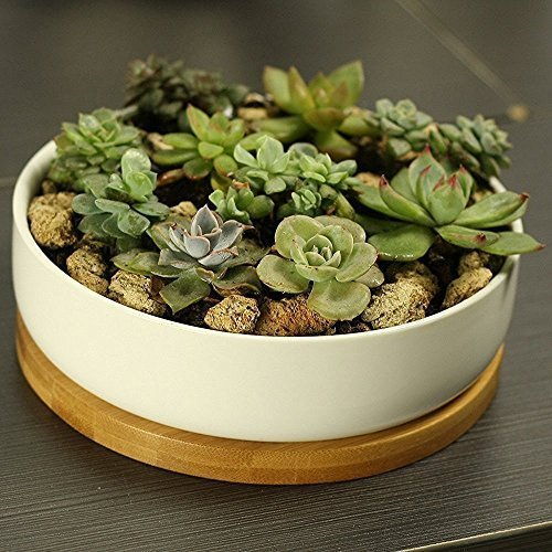 6 Inch Modern White Ceramic Round Succulent Cactus Planter Pot with Drainage Bamboo Tray,Decorative Garden Flower Holder Bowl by Binwen (Image #5)
