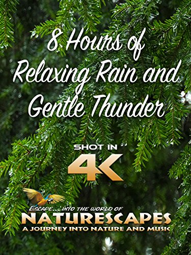 8 Hours of Relaxing Rain and Gentle Thunder