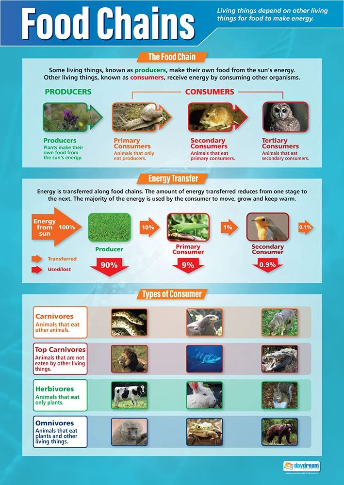 """Food Chains   Science Posters   Gloss Paper Measuring 33"""" x 23.5""""   STEM Charts for The Classroom   Education Charts by Daydream Education"""