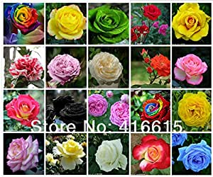 Hot Sale! 20 COLORS 1000 ROSE SEEDS (50 SEEDS EACH COLOR) WITH FULLY SEALED BAG,Flower Seeds,Rainbow Rose,DIY Bonsai