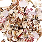 Weoxpr 200pcs Sea Shells Mixed Ocean Beach