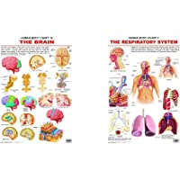 The Brain + The Respiratory System (Set of 2 Books)