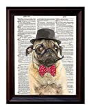"""Dictionary Art Print - Sir Pug Moustache and Bow Tie- Printed on Recycled Vintage Dictionary Paper - 8""""x11"""" - Mixed Media Poster on Vintage Dictionary Page"""