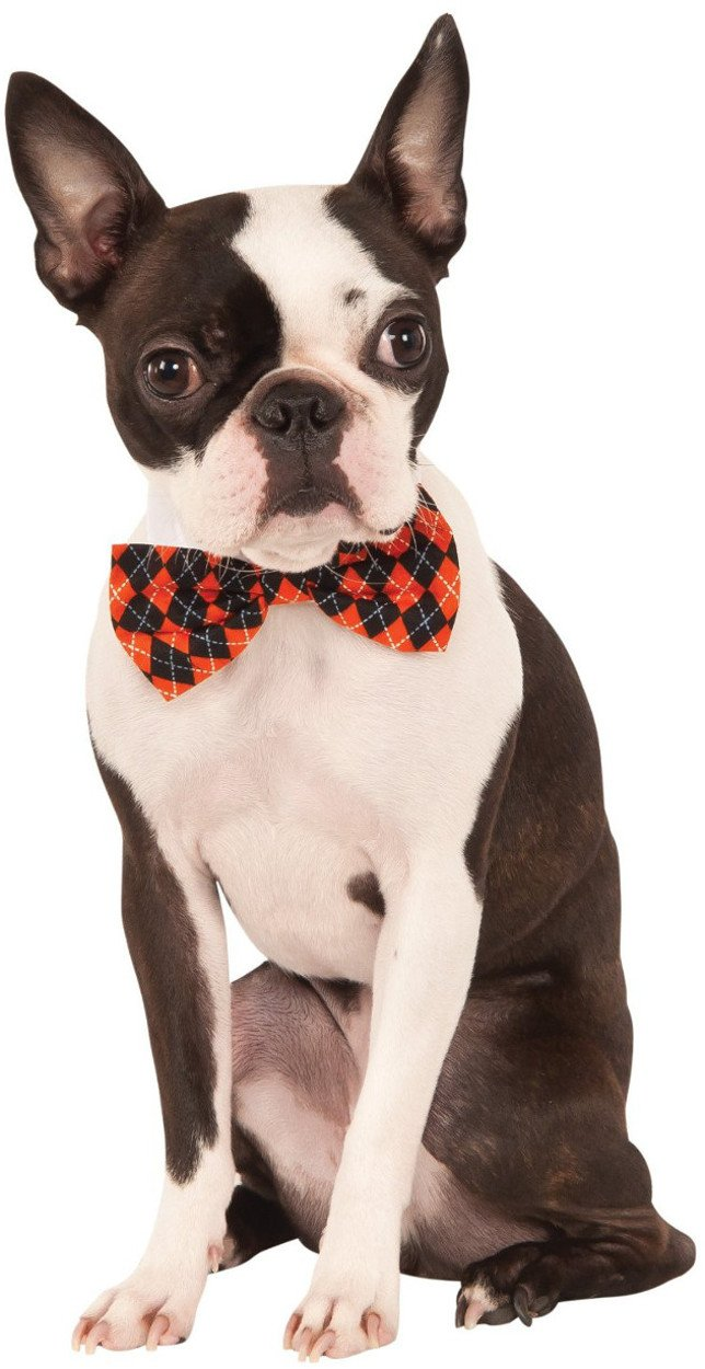 Halloween Argyle Pet Bowtie, Small/Medium