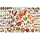 North American Shells Educational Science Chart Poster 36 x 24in