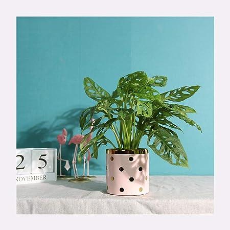 HHH Maceta,Macetas para Cactus De Cerámica,Pequeña Maceteros Pequeños para Suculento Plantas Casa Y Jardin Boda Decorativos Interior,Apto para Aplicaciones Interiores Y Exteriores (Color : Pink): Amazon.es: Hogar
