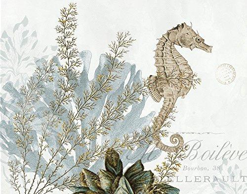 Buyartforless Natural Seahorse 12x16 Ocean Vintage Art Print Poster Decor by Stacey Powell