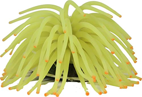 Glofish yellow anemone