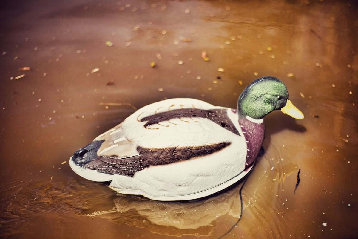 MOJO Outdoors Swimmer Mallard Duck Decoy by MOJO Outdoors (Image #5)